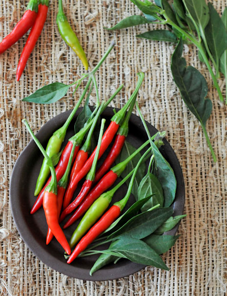 Spotlight on Thai Chili Peppers | Prik Kee Noo | พริกขี้หนู